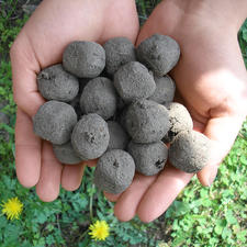 Seed Bomb Kit - These seed bombs will transform barren spaces into flower-filled meadows in 4 to 8 weeks.
