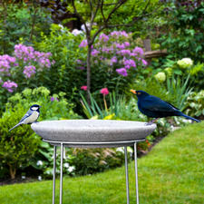 """Granicium® Bird Bath with Stainless Steel Stand - Modern design. The 19.7"""" high stainless steel stand deters cats and other predators. UV and weather resistant."""
