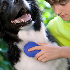 Zilopet Care Brush For Animals - Gentle grooming for your pet – in a natural way.