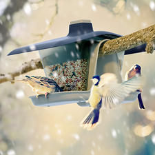 """Bird Feeder """"Multi"""" - Hangs securely from a tree. A perfect fit on the balcony railing."""