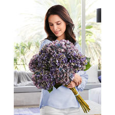 Hydrangea Bouquet - Flowers of everlasting beauty. As an elegant bouquet as though tied by a florist.