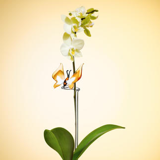 Hummingbird or Butterfly Orchid Stake For firm support. Always beautiful and easy to care for.