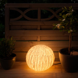Chrysanthemum Light In Asia, a symbol of luck. In your garden, a splendid natural light.