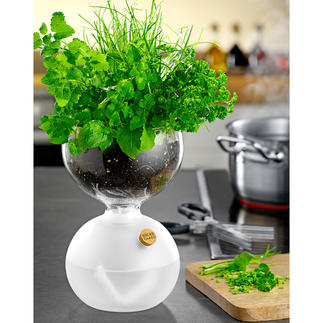 Design Plant Glass This plant glass in award-winning design won't let your herbs and such go thirsty.