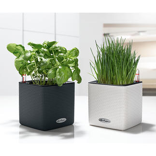 Self-watering Herb Pot Now your herbs can live longer.