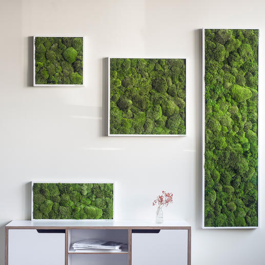 "Frame ""Moss Balls"" - Genuine moss, an eye-catcher on your wall. Specially developed preservation: 100% natural - 0% care."