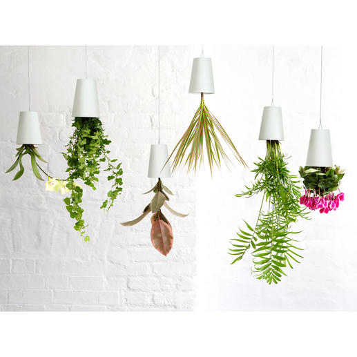 Sky Planter Plant Pot - Herbs, ferns and flowering plants in a stylish upside down plant pot.