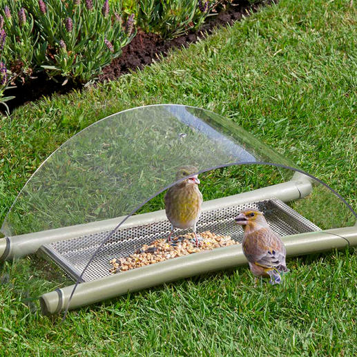 Floor Bird Feeding Station - Feed. Protect. Observe.