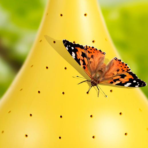 Butterfly-Oasis