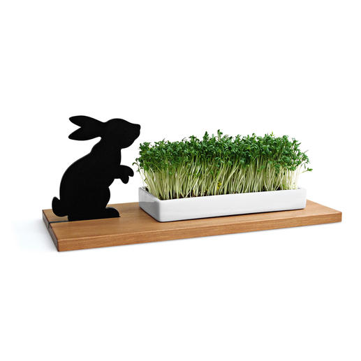 Rabbit Cress Tray