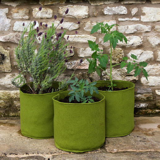 Vigoroot™ Pot The planters of professionals: Air-permeable high-tech fabric instead of plastic.