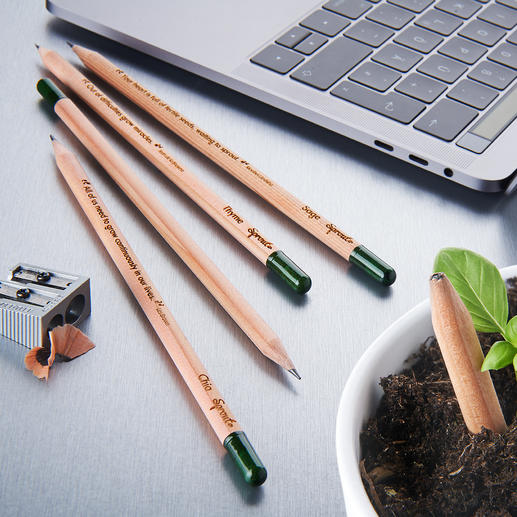 Sustainable Plant Pencils, Set of 5 Brilliant plant pencils with herb and flower seeds.